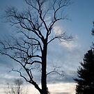 Tree Silhouette  by DreamCatcher/ Kyrah
