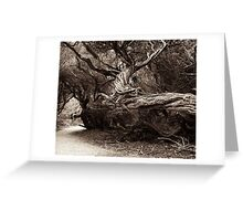 tea tree Greeting Card