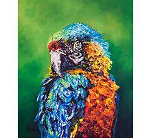 Parrot Challenge 1 Photographic Print