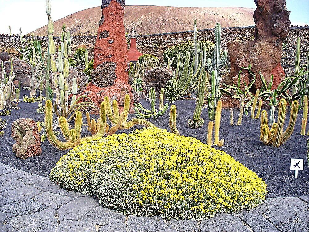 The Cactus Gardens Of Lanzarote by Fara