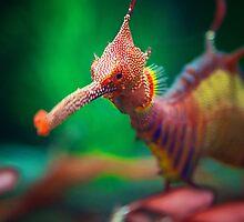 Sea Dragon by KirstyStewart