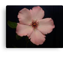 Divine Pink Canvas Print