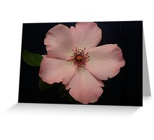 Divine Pink Greeting Card