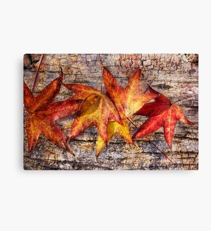 Maple Leaves Canvas Print