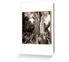yosemite trees Greeting Card