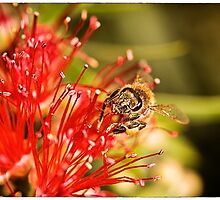 Pure Nectar by Paul Amyes