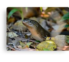 Land Mullet 1 Canvas Print
