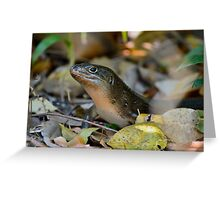 Land Mullet 1 Greeting Card