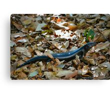 Land Mullet 2 Canvas Print