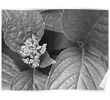 plain leaves Poster