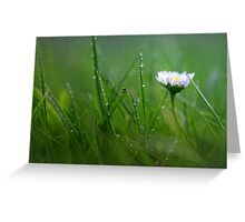 Daisy in the wet grass... Greeting Card