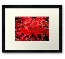Autumn Leafs Framed Print