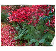 Blackhills Autumn Plants in bloom. Poster
