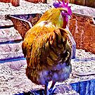 ROOSTER~~ by Sassafras