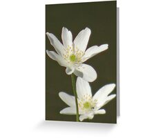 Two cute, white flowers Greeting Card