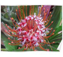 African Flower Poster