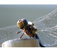 Dragonfly. Photographic Print