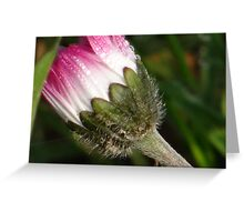 Pink daisy with waterdrops Greeting Card