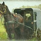Amish of Lancaster County by Dyle Warren