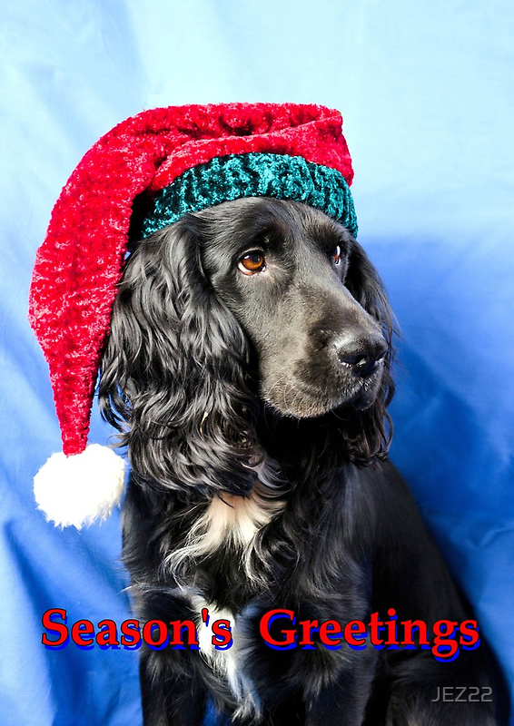Season's greetings dog by JEZ22