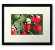 Berries 2 Framed Print