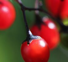 Berries 4 by marybedy