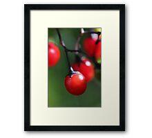 Berries 4 Framed Print