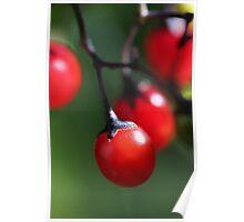 Berries 4 Poster
