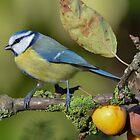 Blue tit - II by Peter Wiggerman