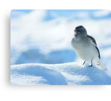 Gorgeous bird on the mountain peaks skiing Canvas Print
