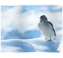 Gorgeous bird on the mountain peaks skiing Poster