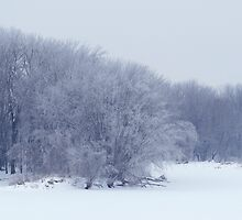 Winter Mist by WildThingPhotos