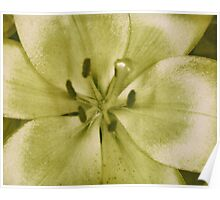 Yellow Flower #1 Poster