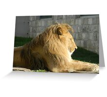 Lion, Pioneer Valley in Sarajevo Greeting Card