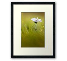 Sweet Daisy! Framed Print