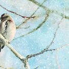 winter's perch... by cutebutstupid