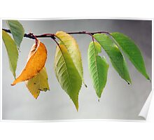 Autumn Leaves in Peebles Poster