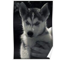 Precious Pup Poster