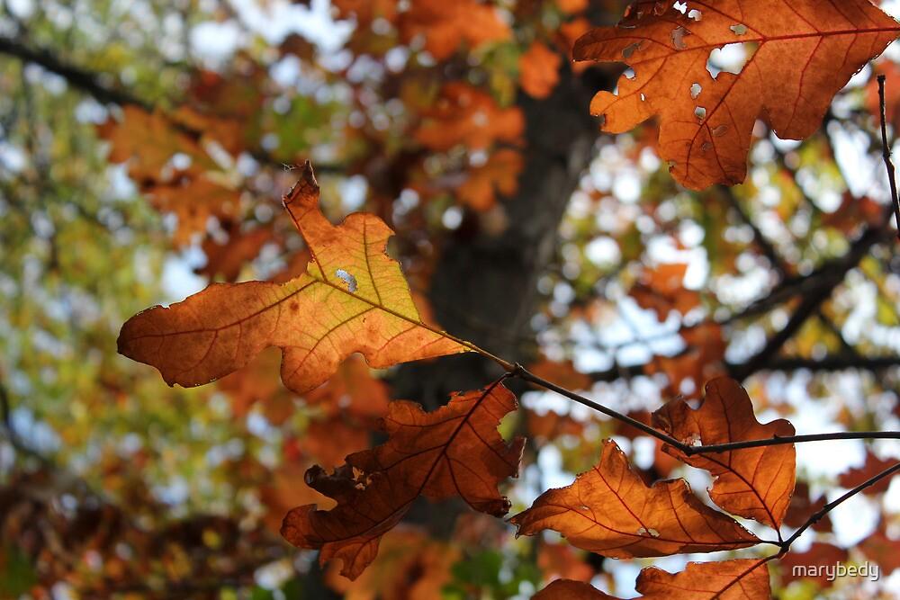 Fall Oak by marybedy