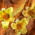 Hermerocallis by Dale Lockridge