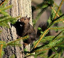 Black Squirrel by Larry Baker