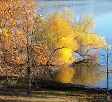 Trees at the Lake by PicsbyJody