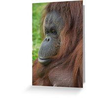 Orangutan (Ponga pygmaeus) Greeting Card