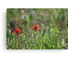 COLORADO INDIAN PAINT BRUSH Canvas Print