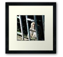 A rupee for your thoughts... Framed Print