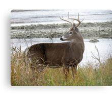 8 Point by the River Metal Print