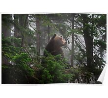 Bear in the Mist Poster