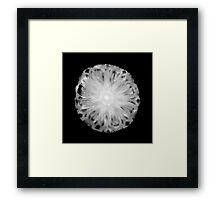 Pineapple Framed Print