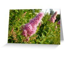 Pink wild flower Greeting Card