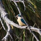 sacred kingfisher by Kym Bradley